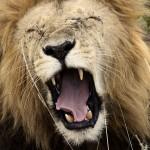 肩こり首筋スッキリ!ライオンあくび体操